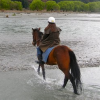 Thumbnail image for New Zealand: Cantering Near Canterbury