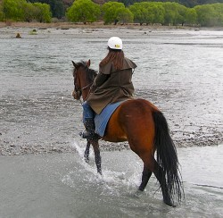 Post image for New Zealand: Cantering Near Canterbury