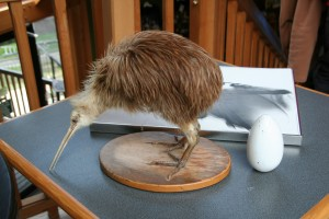 kiwi-bird-specimen-and-egg