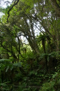 dense-forest-of-stewart-island-new-zealand