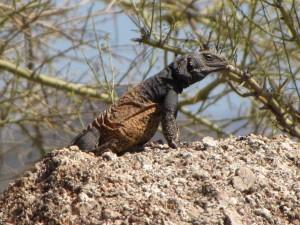 lizard-pinnacle-peak-trail-scottsdale-arizona