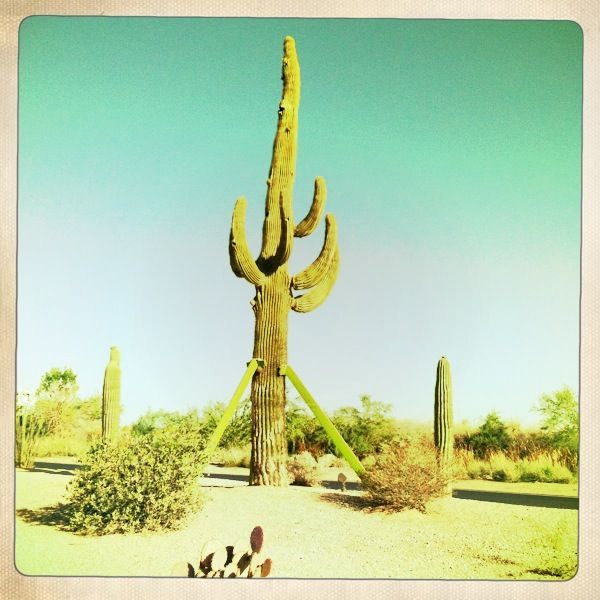 saguaro-sentinal-phoenix-arizona