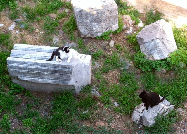 image-cats-on-columns-rome-italy.jpg